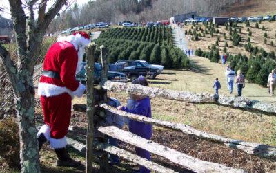 Choose & Cut Christmas Tree Package at Meadowbrook Inn