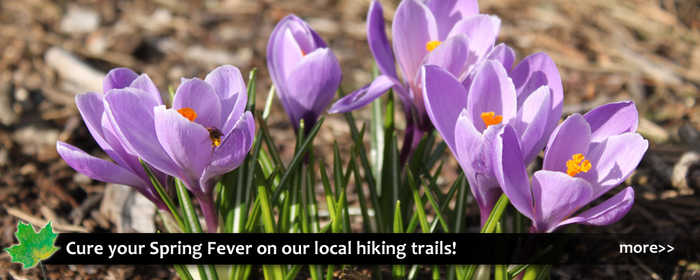 Spring hiking trails and sight seeing in the High Country, Blue Ridge Parkway, Blowing Rock, North Carolina.