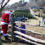 Choose & Cut: Starting the weekend after Thanksgiving, local Christmas tree farms will help you find the perfect tree among the many rows. Varieties include Frasier Fir, White Pine and Blue Spruce, with wreaths and garlands also available.