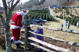 Choose & Cut Christmas Tree Package at Meadowbrook Inn