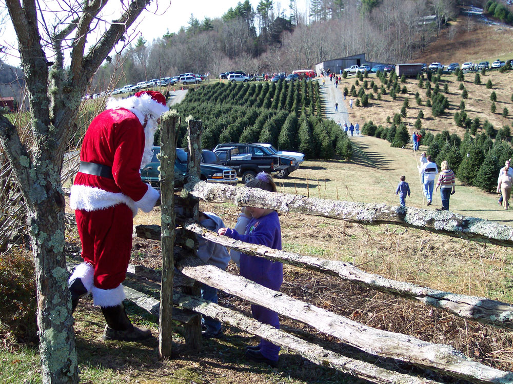 Choose & Cut Christmas Trees - Blowing Rock, North Carolina