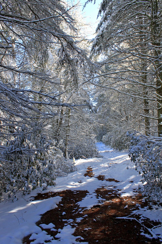web- snow 064