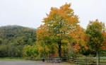 Fall Color at Tweetsie Railroad