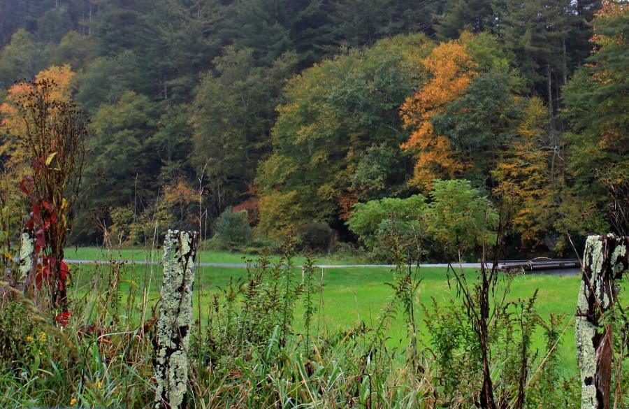 Ashe county fall color