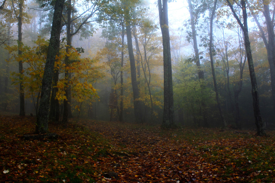 fall color in foggy forest