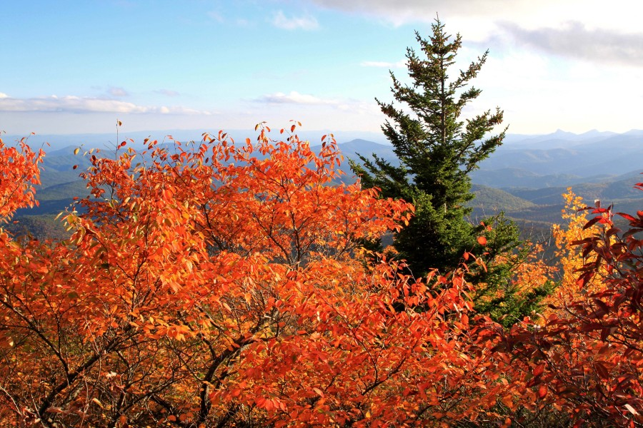 gorgeous fall color on the blue ridge parkway