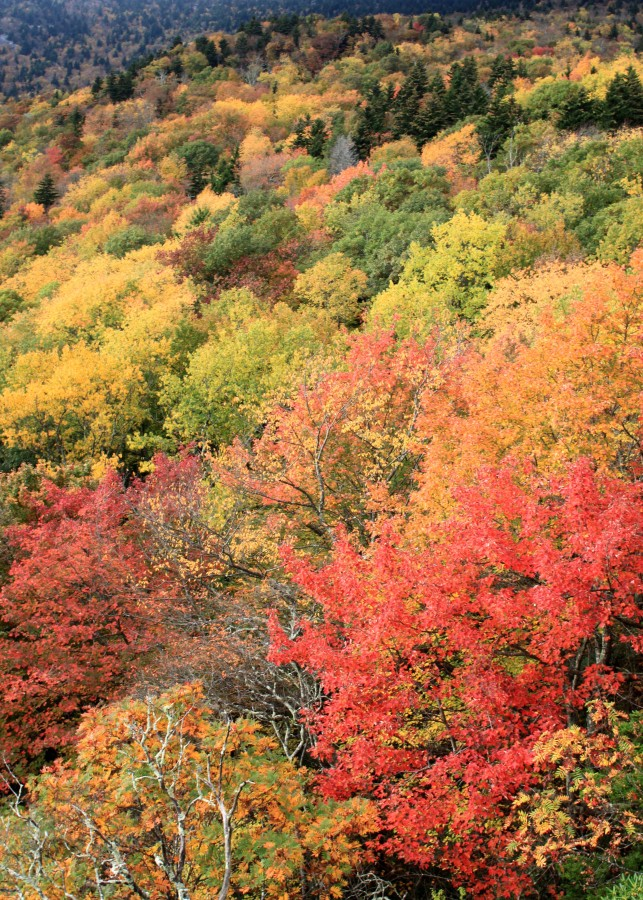 Fall color at rough ridge on the Blue Ridge Parkway near blowing Rock nc