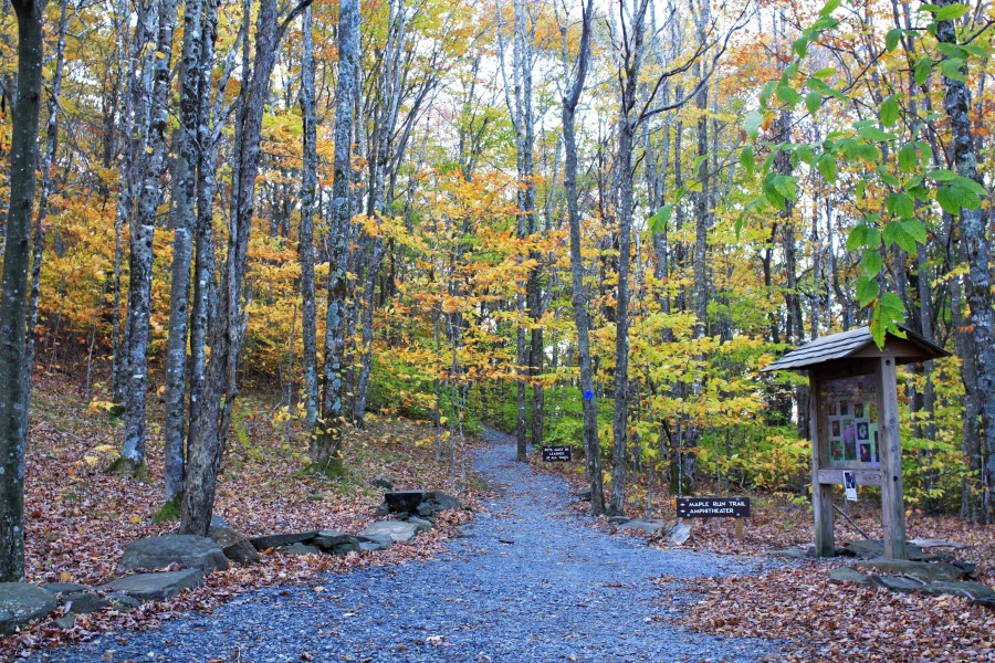 fall foliage at elk knob state park