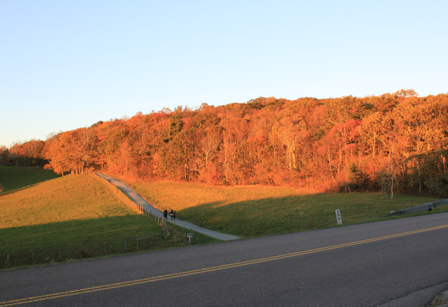 fall foliage at sunset