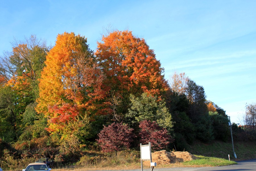 Fall color in West Jefferson