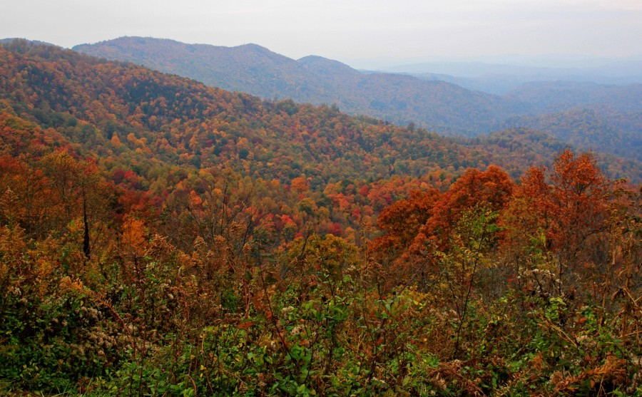 Fall Color from Grandview Overlook on the Blue Ridge Parkway