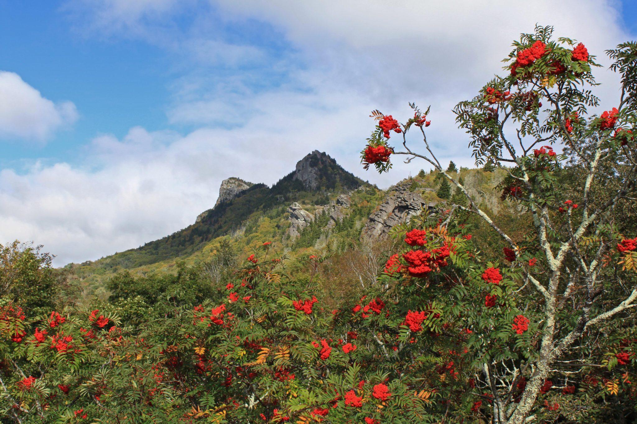 Foliage at grandfather mountain's half moon overlook