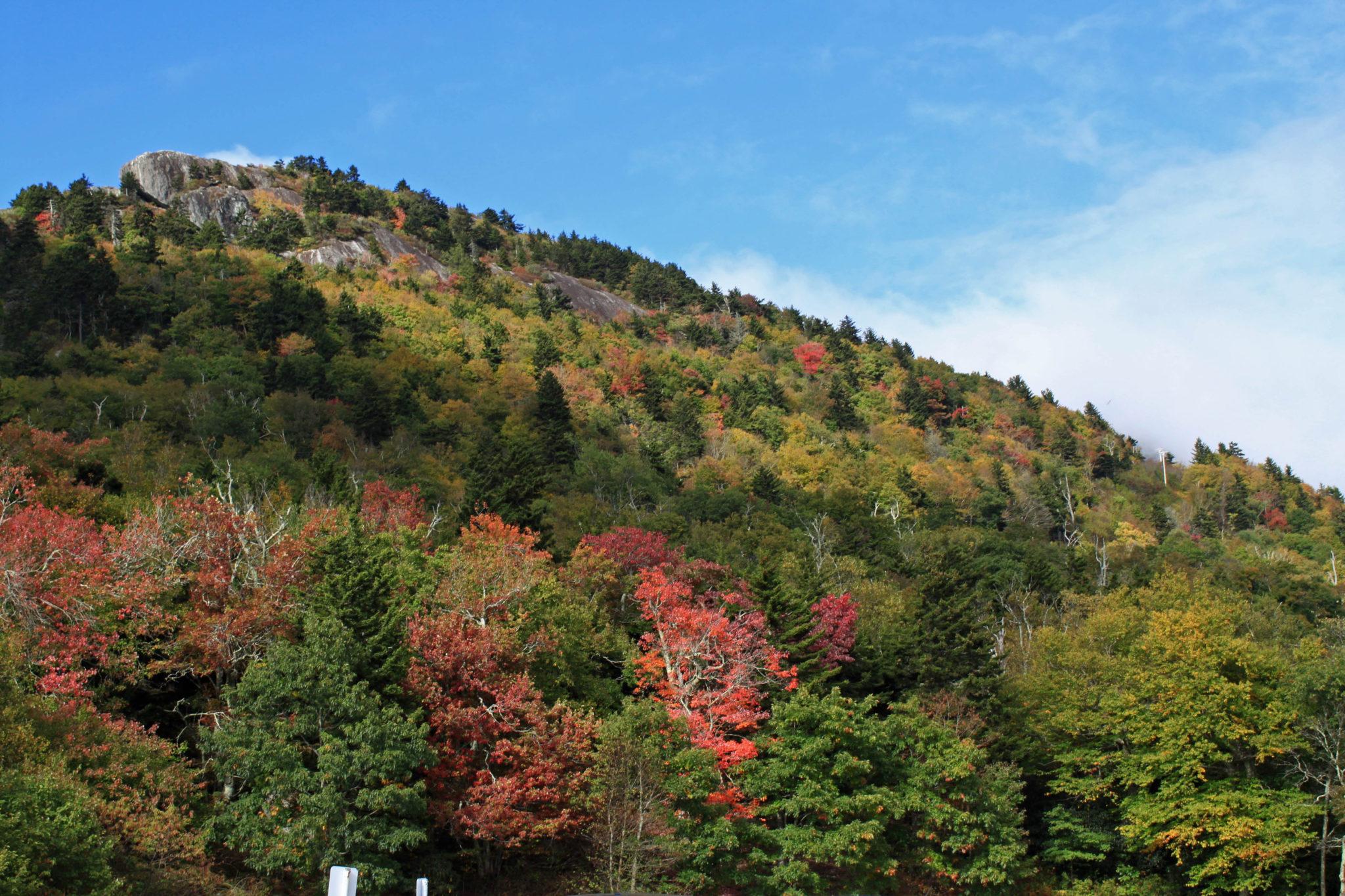 early fall foliage on Grandfather Mountain