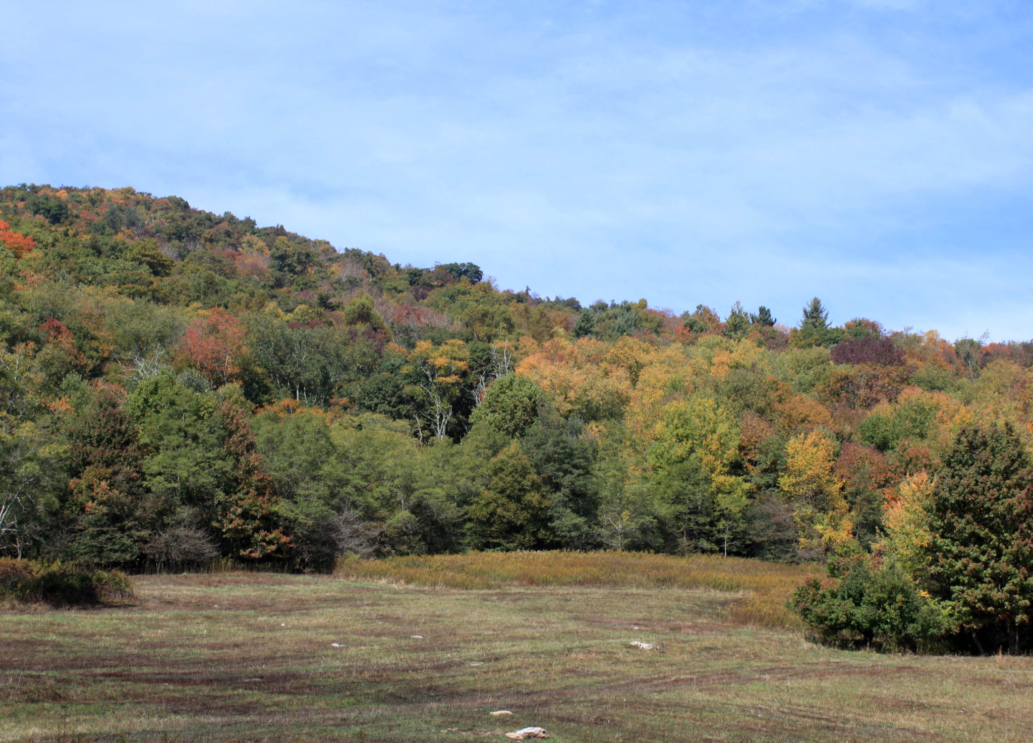 Fall foliage on Blue Ridge Parkway at Price Park