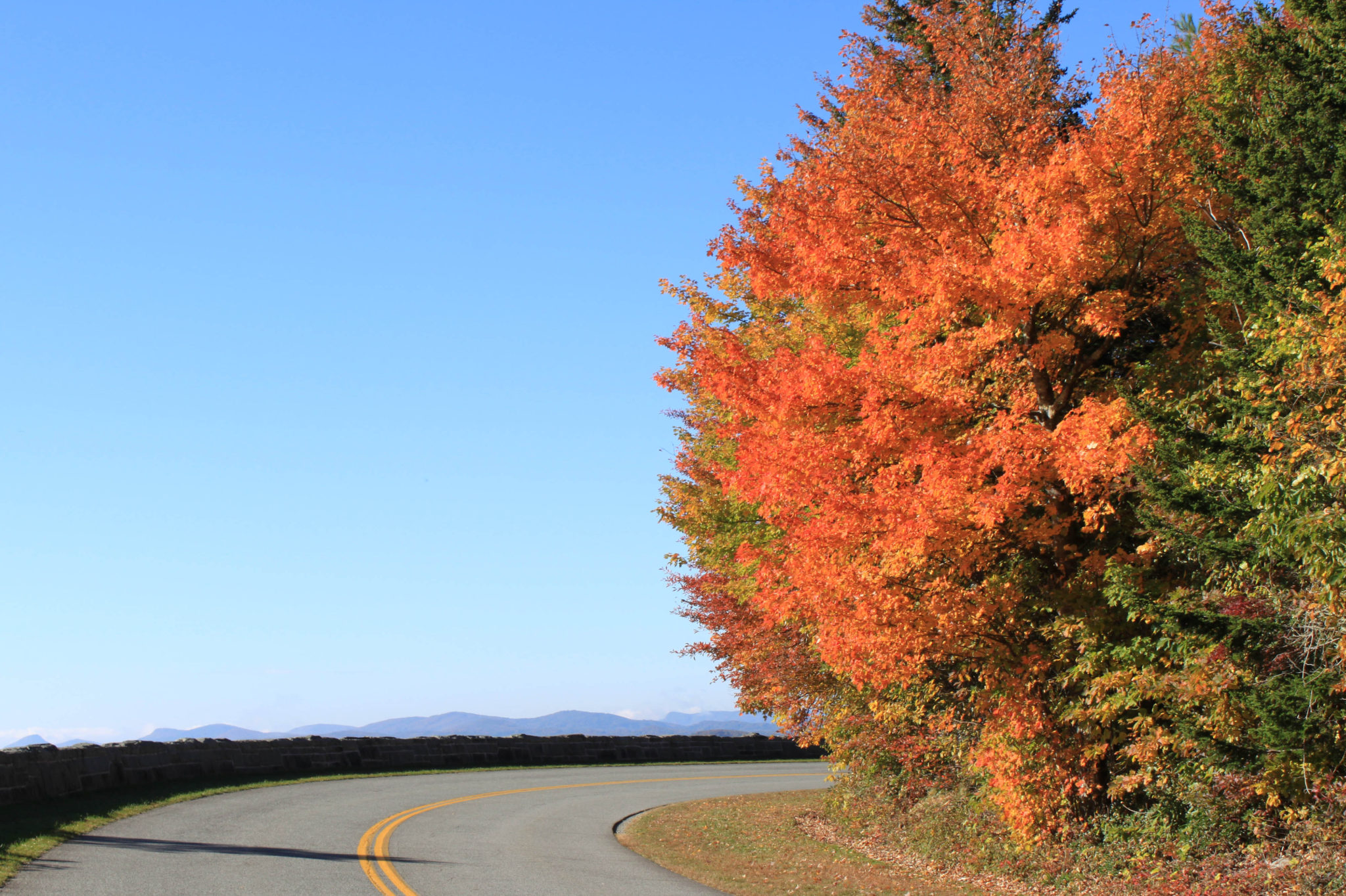 fall foliage on the Blue Ridge Parkway near Blowing Rock NC