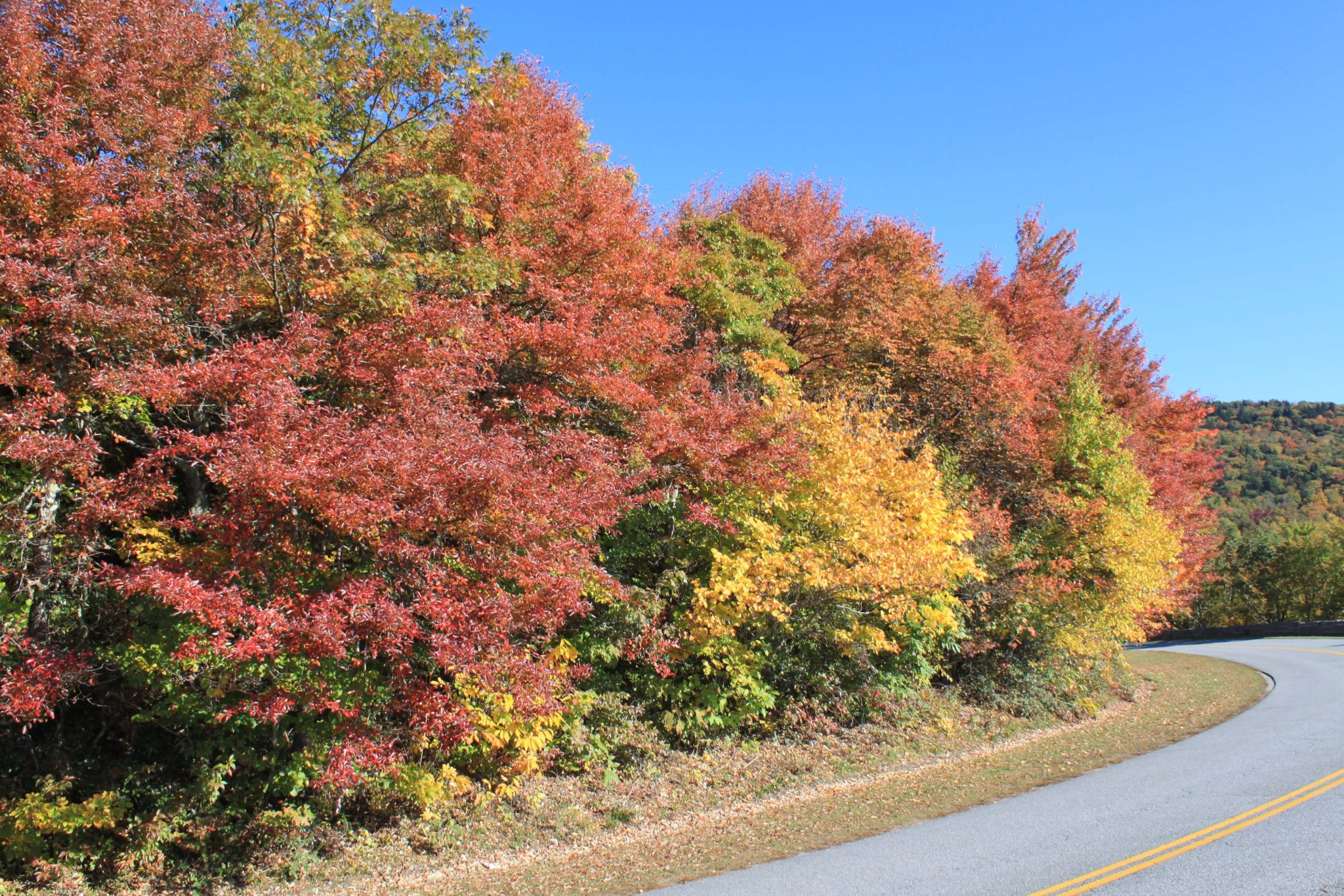 Fall leaves near the Linn Cove Viaduct