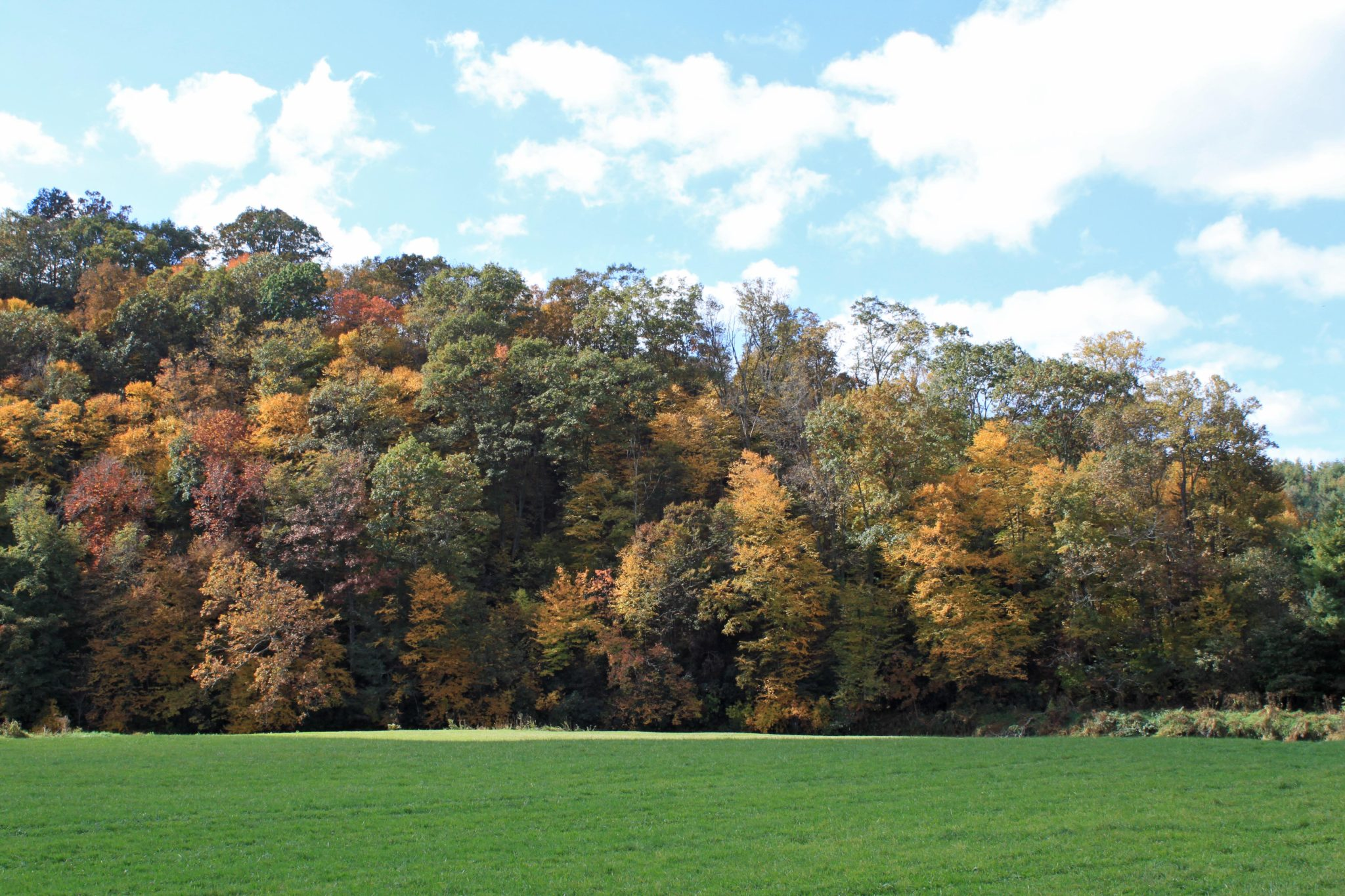 Fall foliage near South Fork of New River