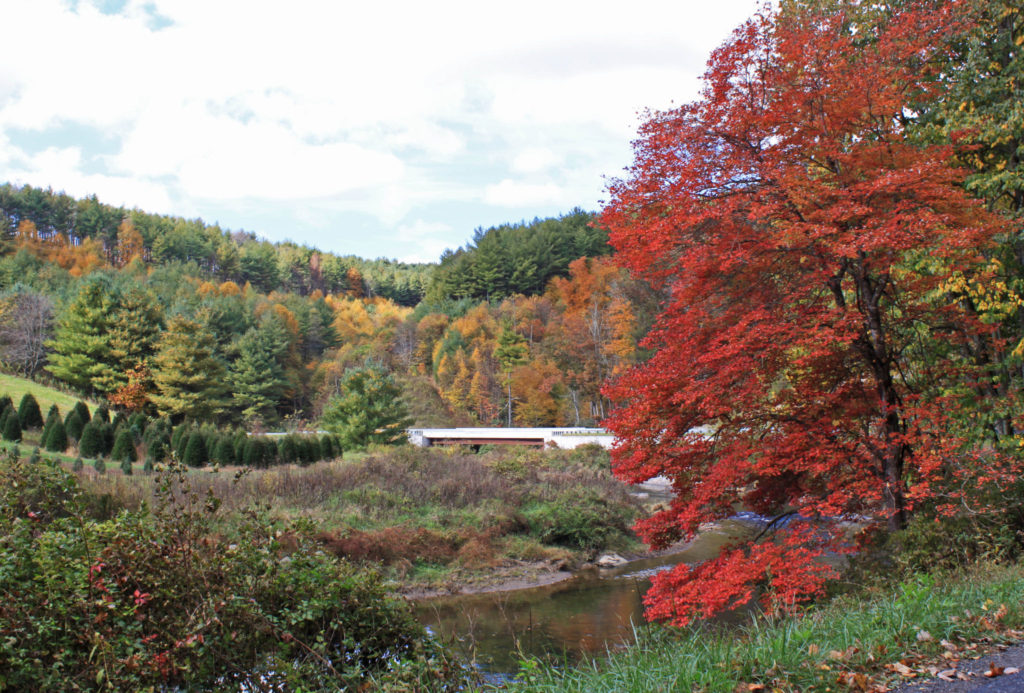 fall color along new river high country nc