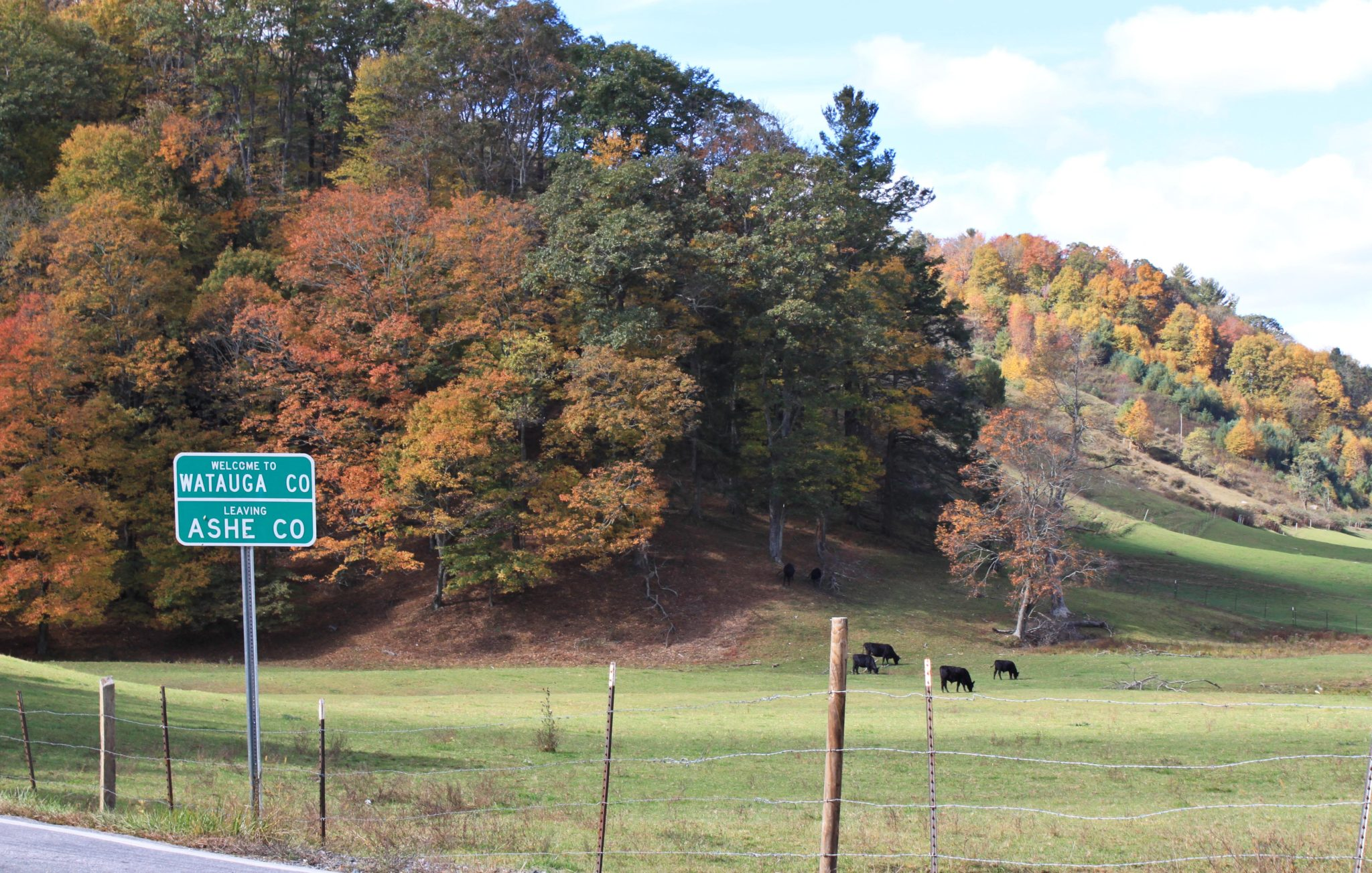 fall foliage at county line