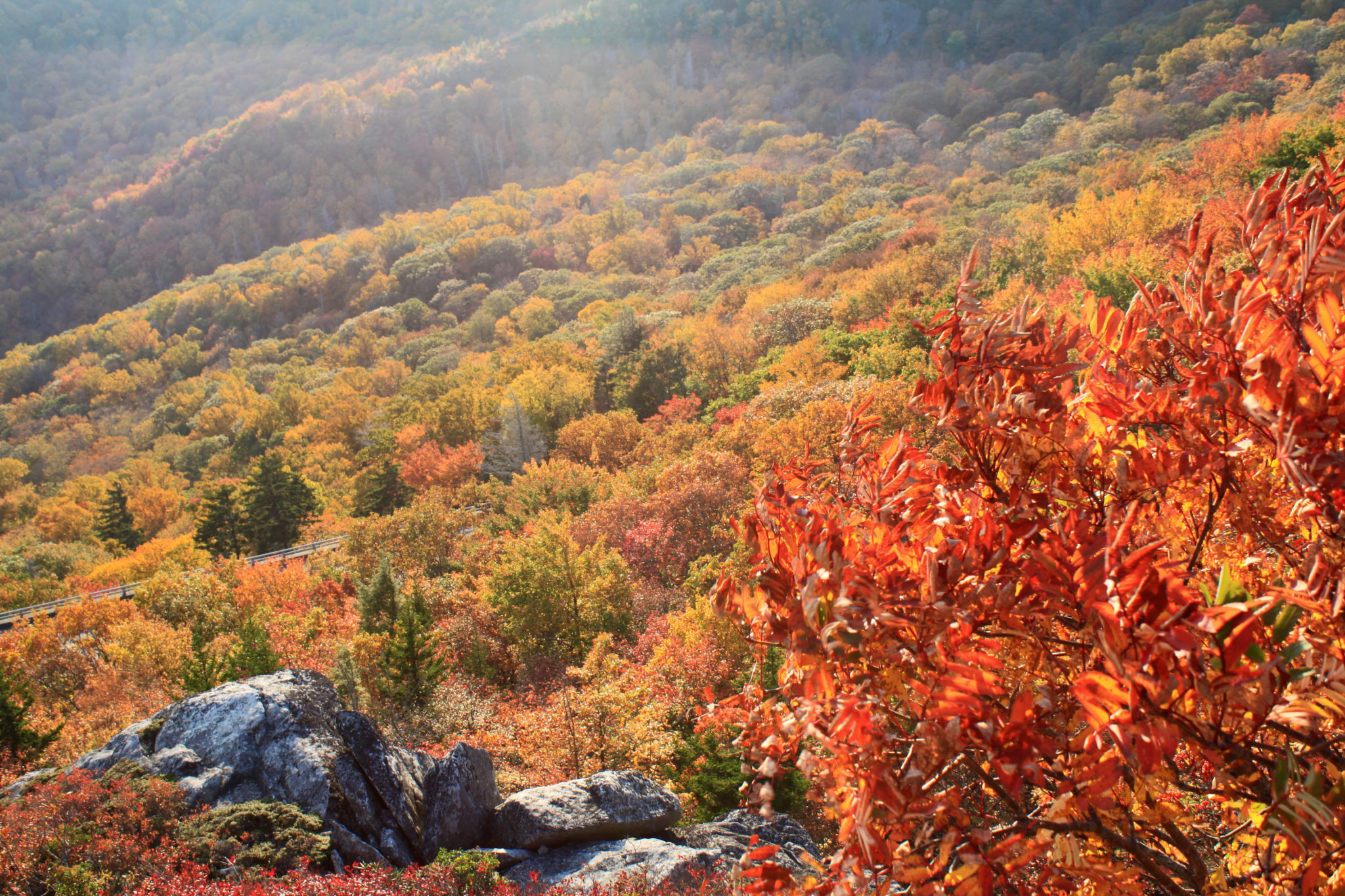 fall color at rough ridge near blowing rock nc