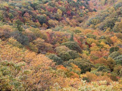 Memorable Leaf Viewing Activities