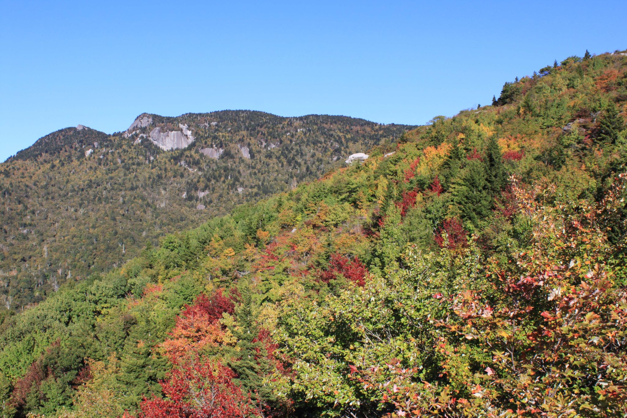 fall color at rough ridge