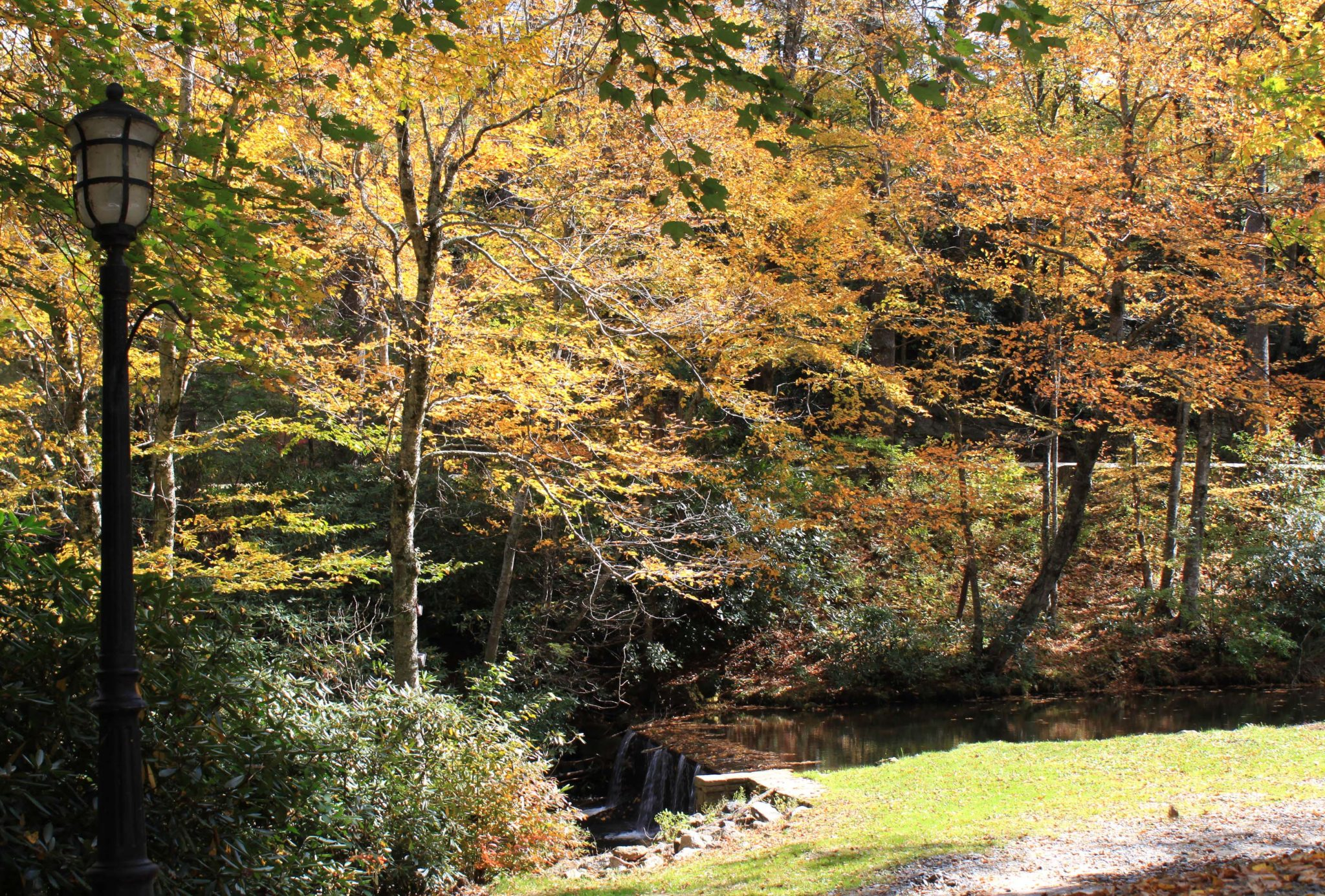 fall color at Chetola Resort
