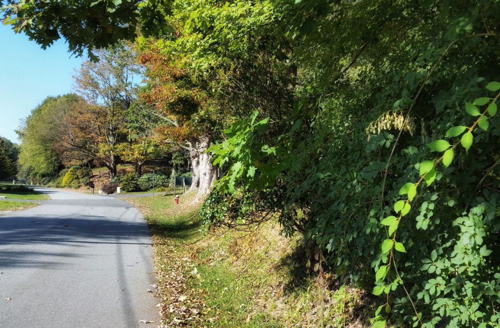 early fall color in blowing rock nc