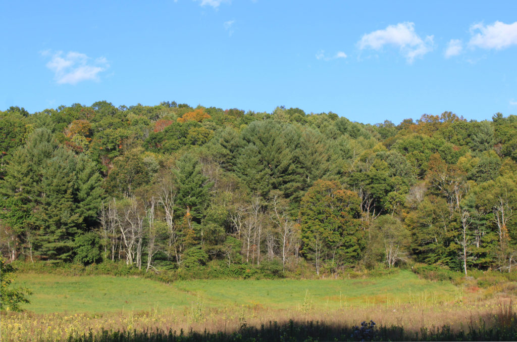 Early fall foliage beginning in Ashe County