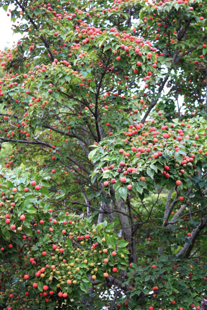 fall fruit in blowing rock nc