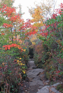 fall foliage autumn color rough ridge tanawha trail blue ridge parkway