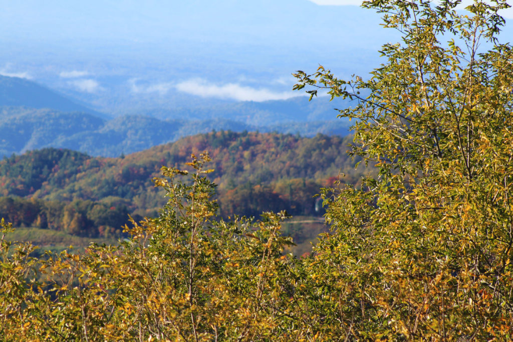 Fall color near Blowing Rock, NC