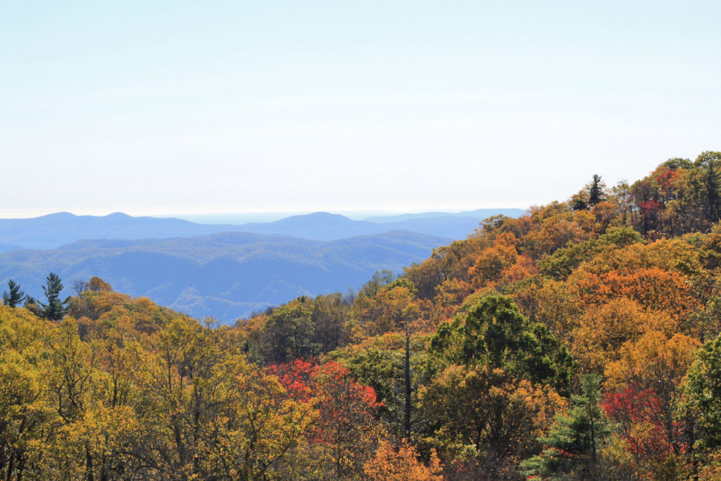 fall color late season in Blowing Rock