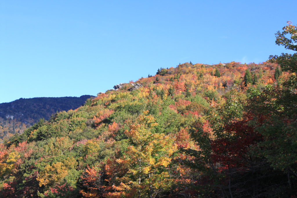 fall color on the blue ridge parkway