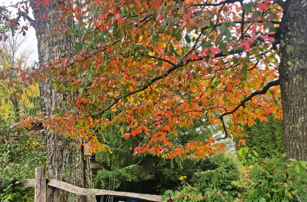 Bright fall leaves in Blowing Rock