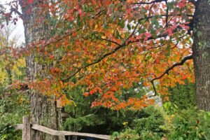 Daily Fall Photo: October 13, 2017