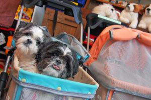 Pet Friendly Lodging