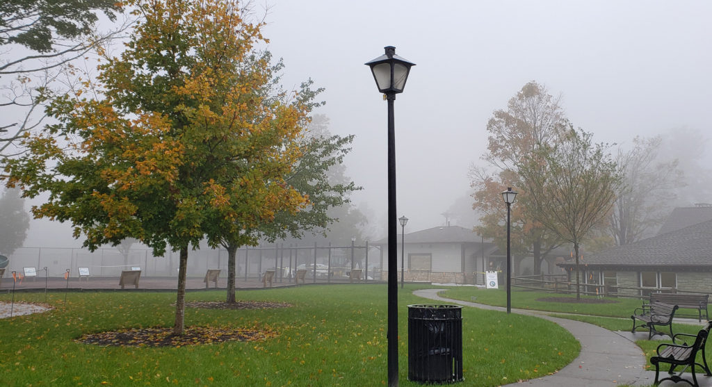 foggy fall day in Memorial Park