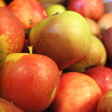 Heirloom Apples in the High Country