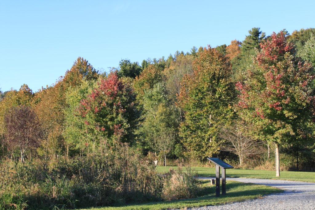 Boone Greenway fall