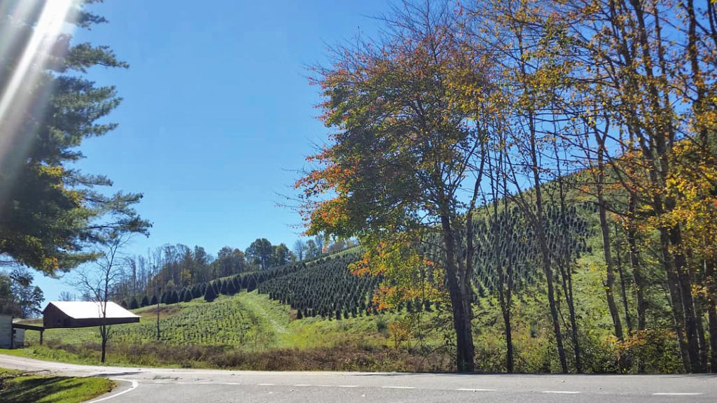 fall in Ashe County