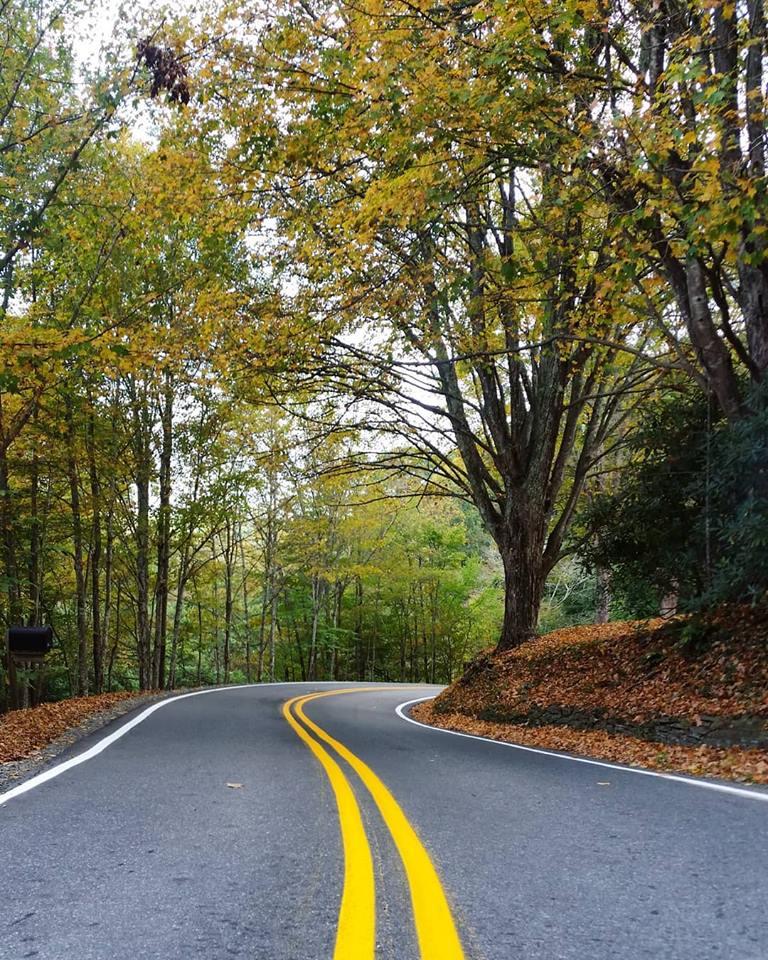 golden leaves on Shull's Mill Road