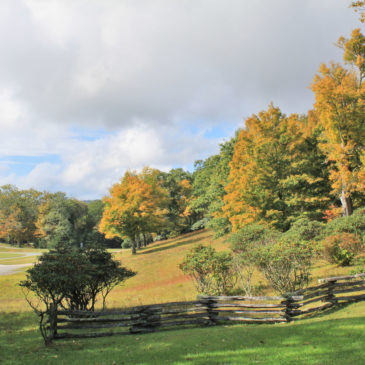 Fall Color Update: October 16, 2019