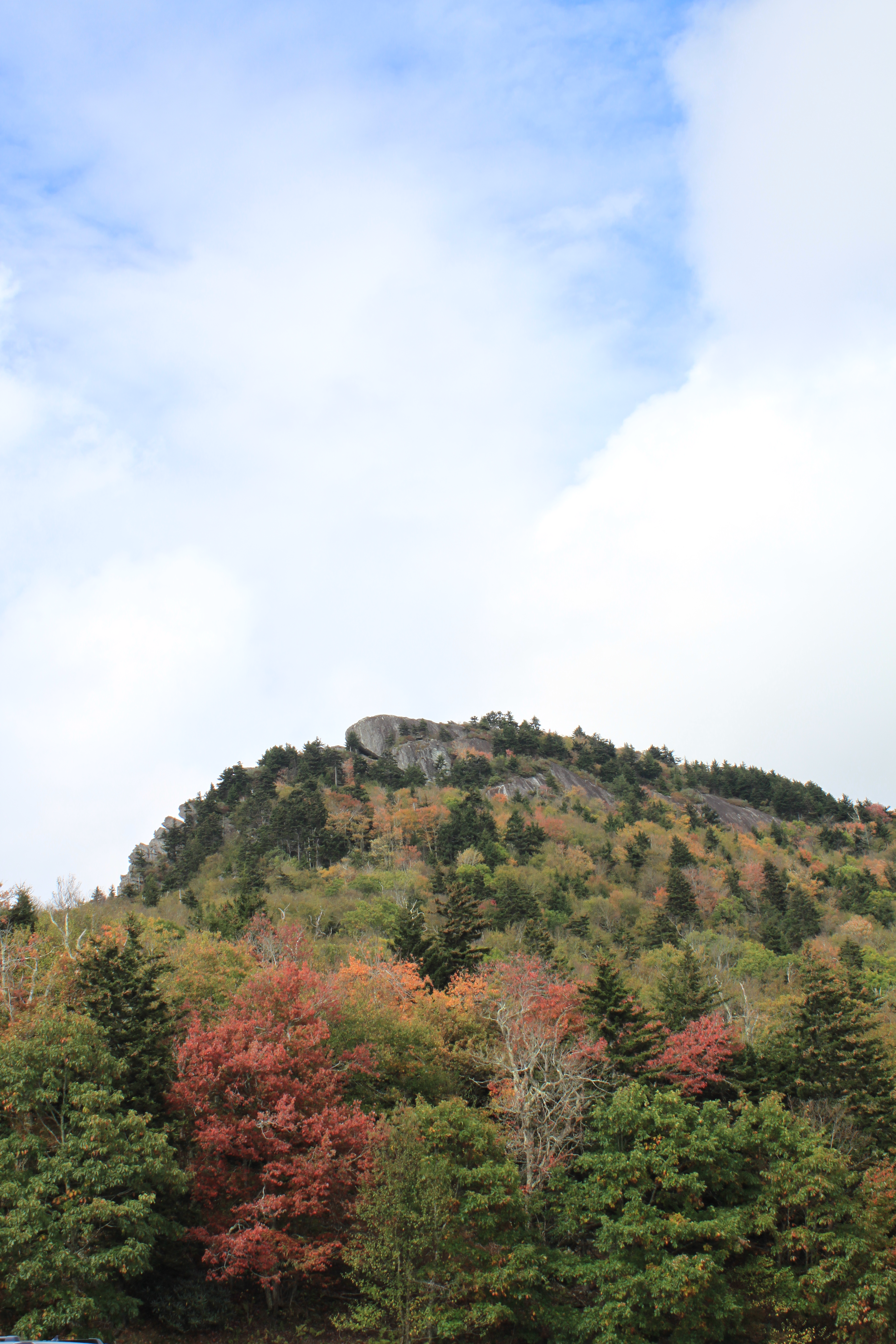 on Grandfather Mountain