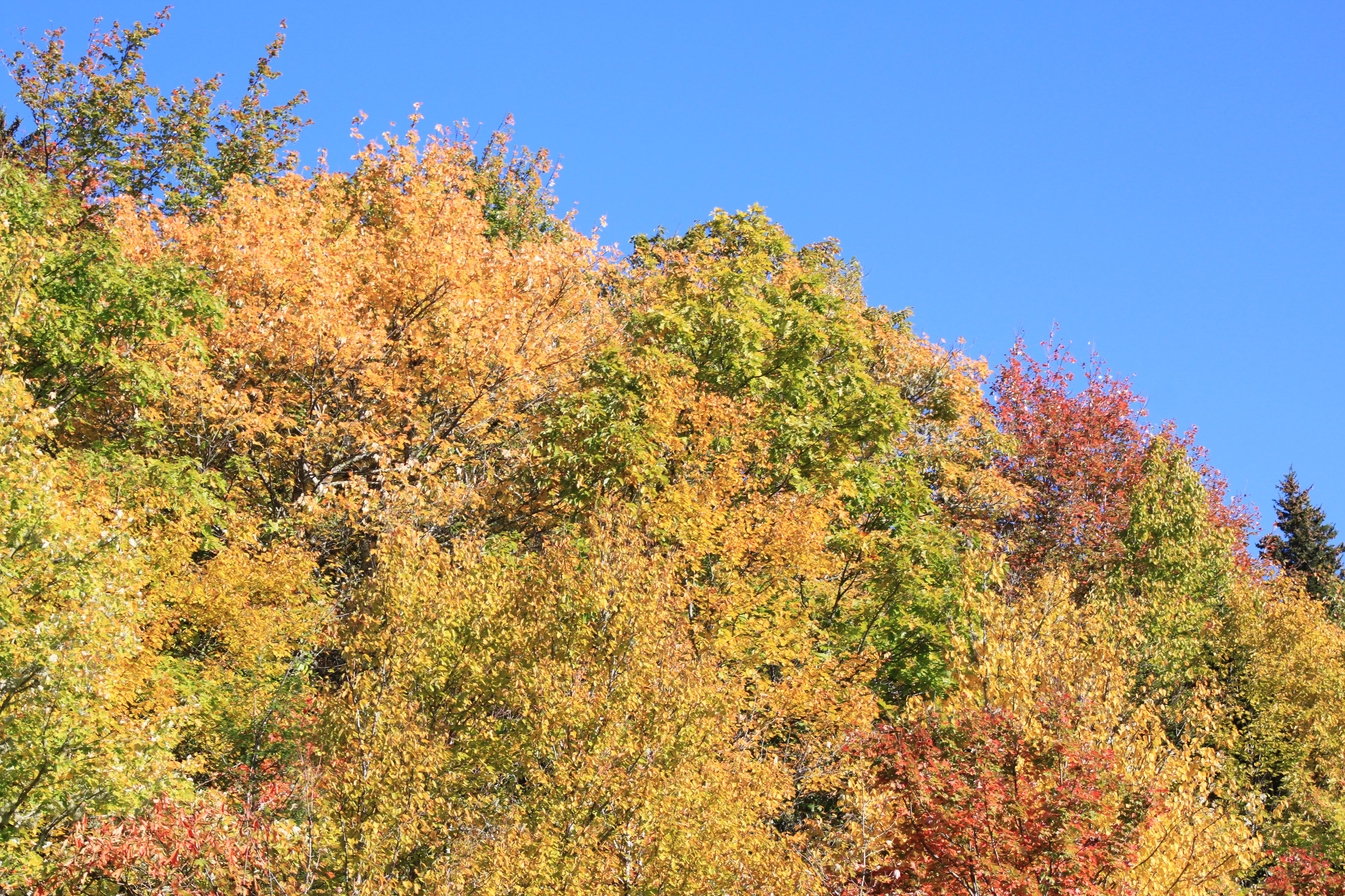 foliage at Stack Rock