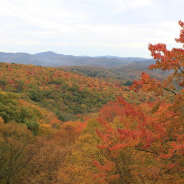 Fall Color Update: October 28, 2019