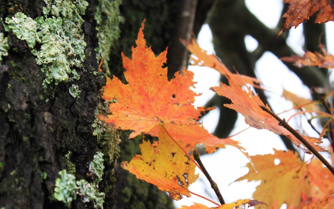 rainy day fall color