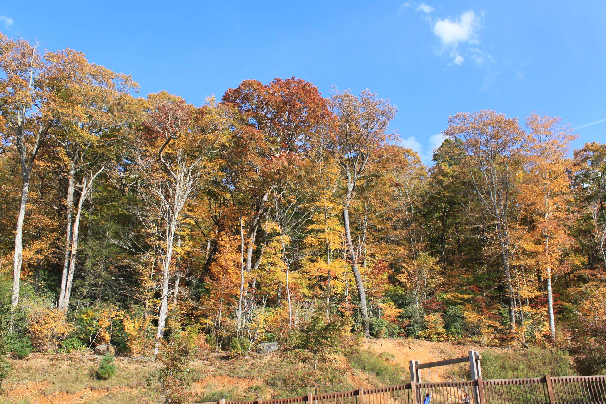 fall foliage boone nc