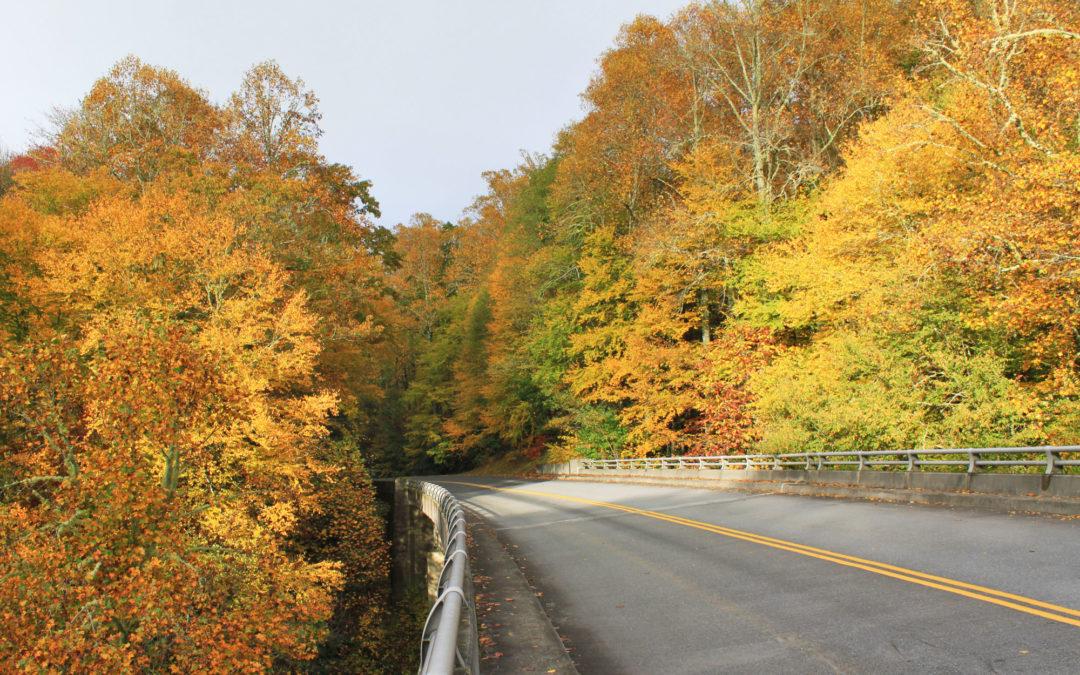 MP 295.3 – Sims Creek Overlook & Green Knob Trail