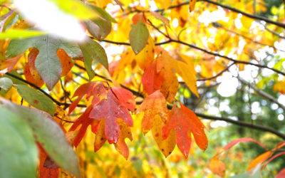 Daily Fall Photo: October 7, 2021